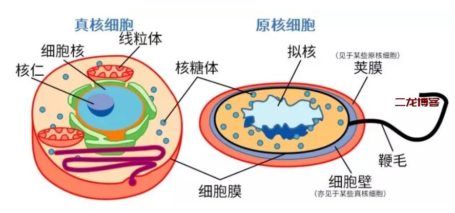 了解细菌、病毒、传染病等基础知识,更好的认识2019新型冠状病毒